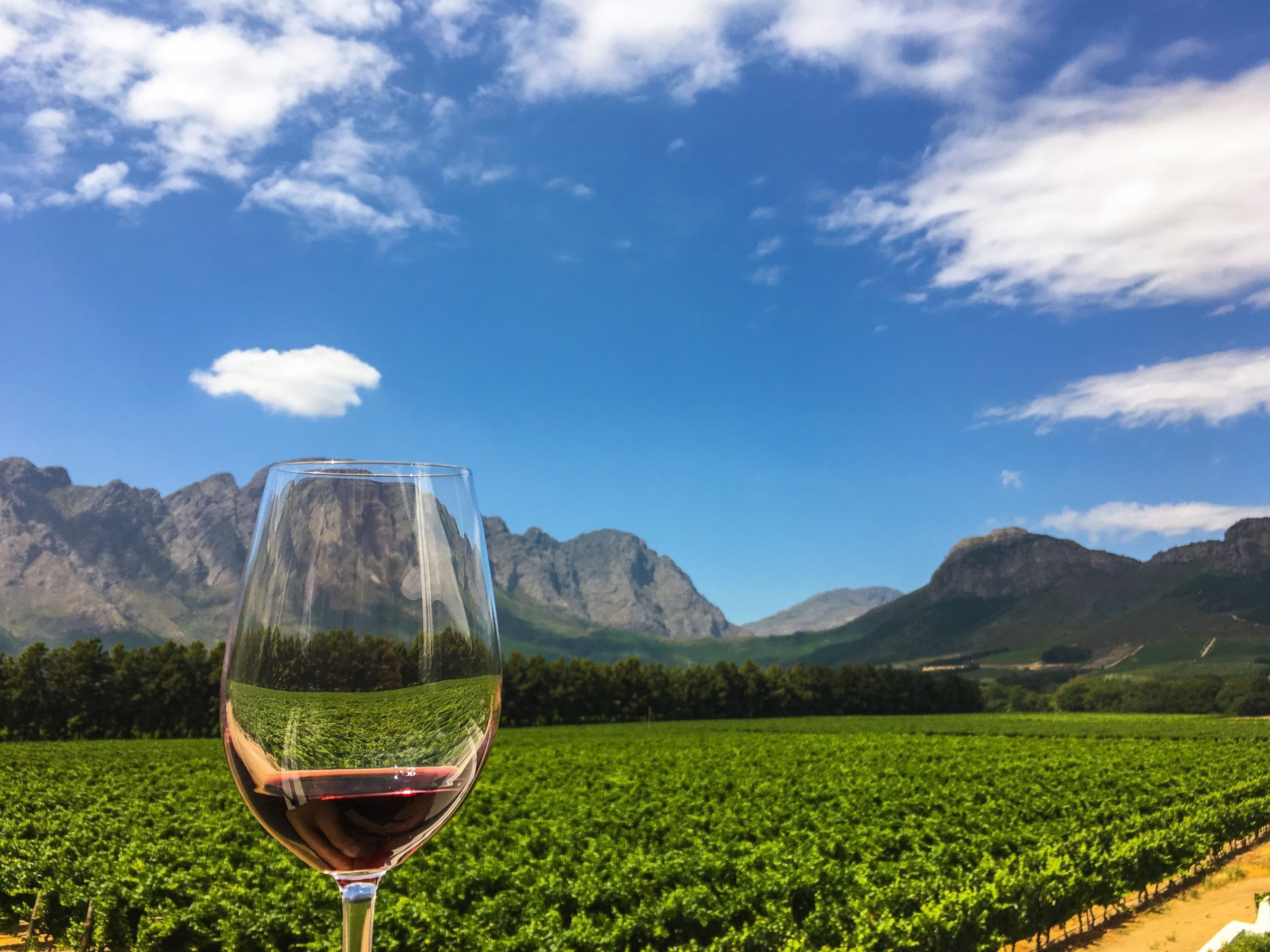 Winelands wine glass overlooking the vineyard