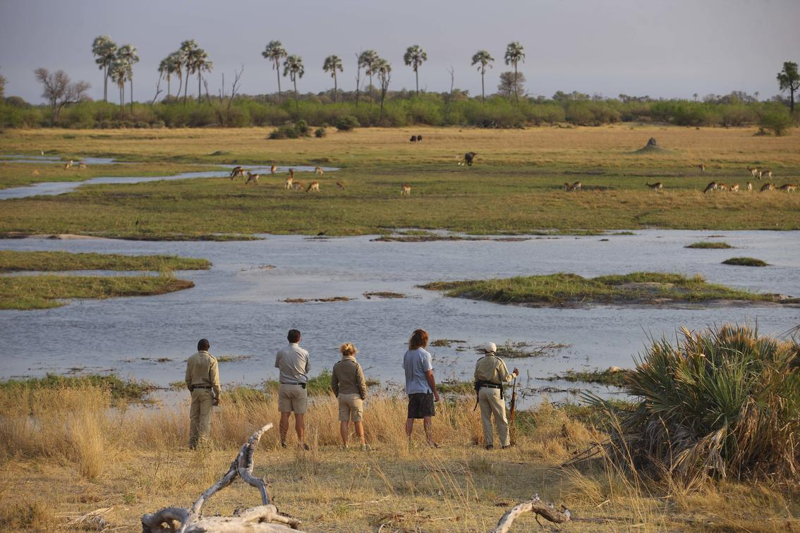 Guests at Sandibe on a walking safari in the Okavango Delta, overlooking some floodplains