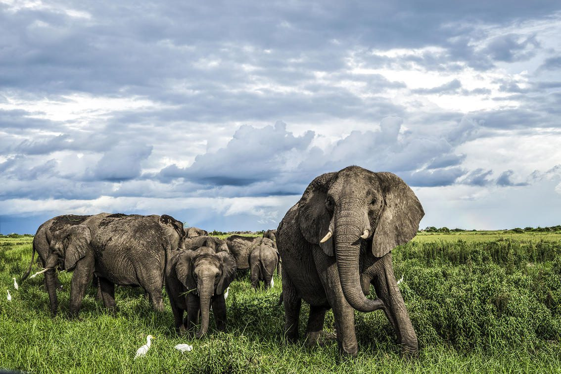 Small herd of elephants standing in the grass at Duba Explorers Camp
