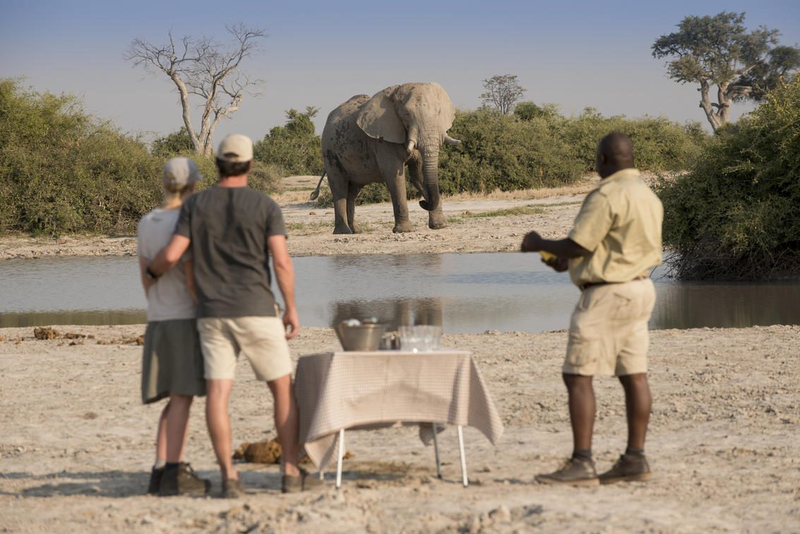 A couple and their guide watch a lone elephant while they enjoy their sundowners on a game drive at Savute Under Canvas.