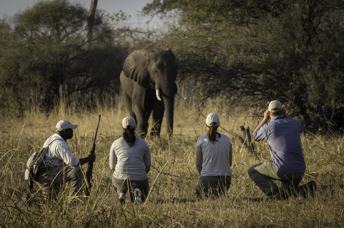 Guests observe a lone elephant on a walking safari at Linyanti Tented Camp