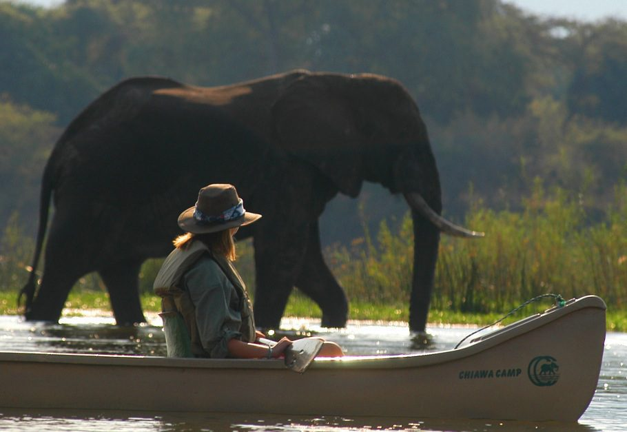a woman in a canoe stopping to admire an elephant in the water near Chiawa camp.