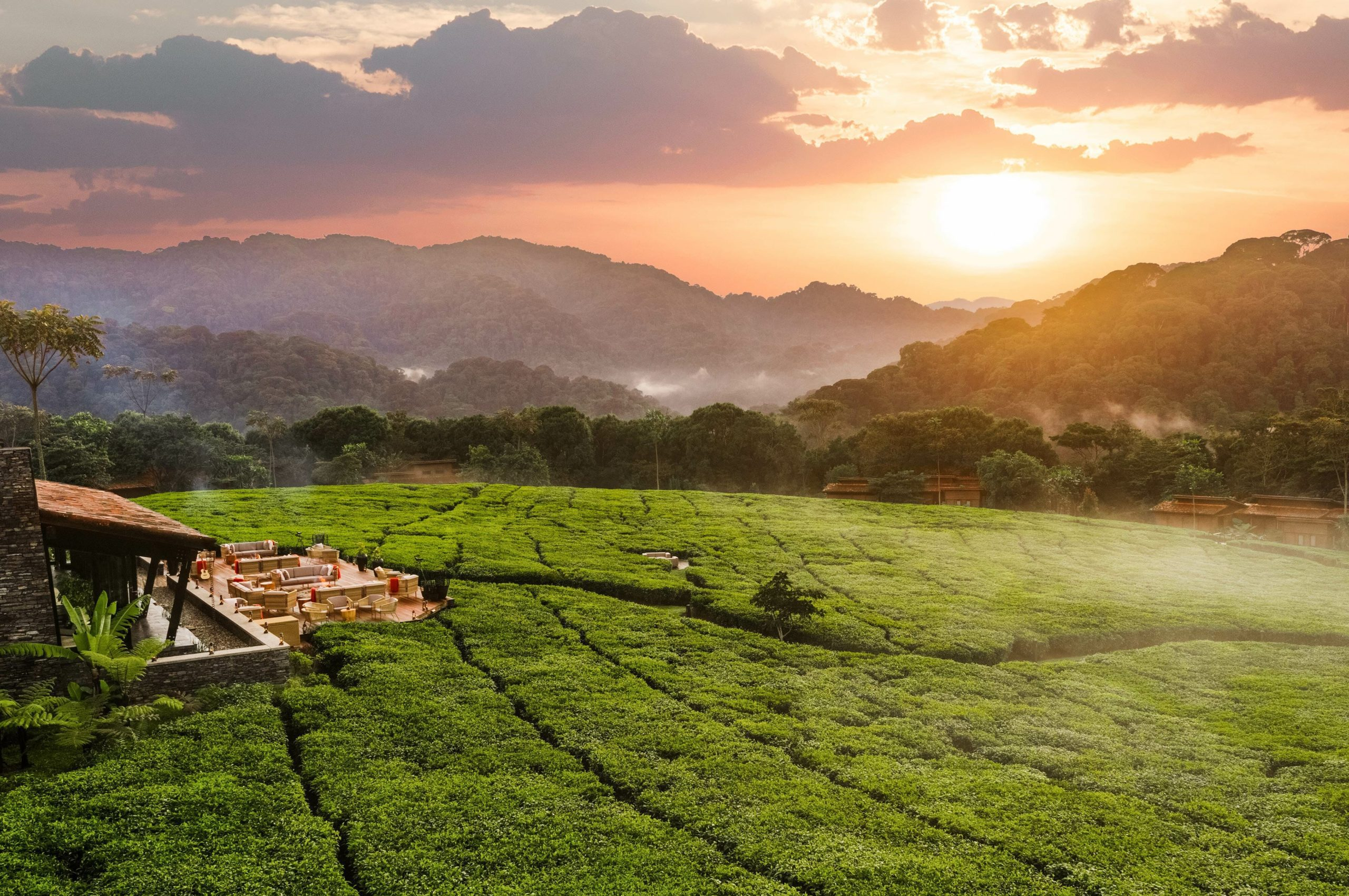 view past Nyungwe House across tea plantation to National Park