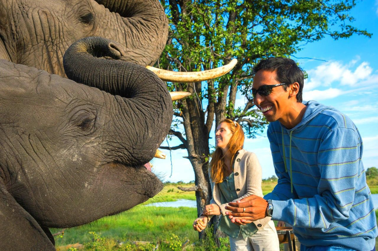 couple at abu camp interacting with two elephants