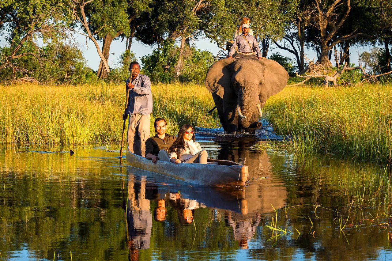 guests in mokoro with elephant