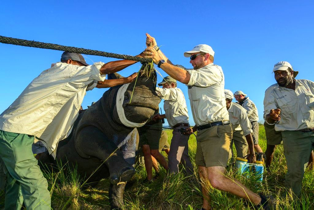 solo travel groups perform rhino horn notching on a guided conservation travel itinerary in South Africa