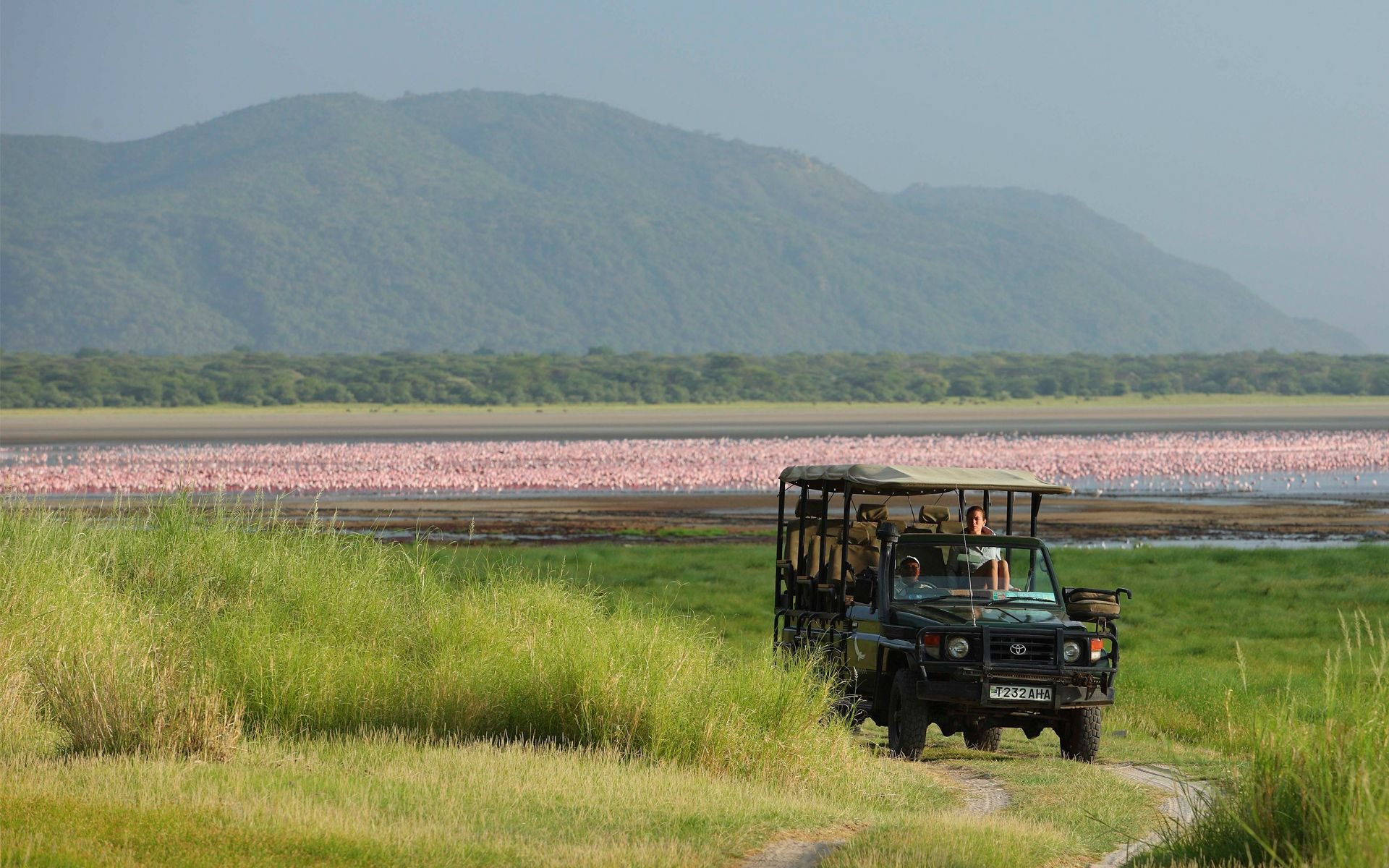 safari vehicle driving away from Lake Manyara fully covered by pink flamingos with the escarpment in the distance