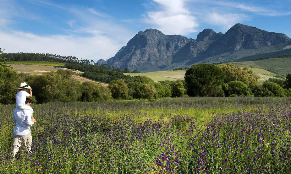 beautiful views from Babylonstoren of the cape winelands