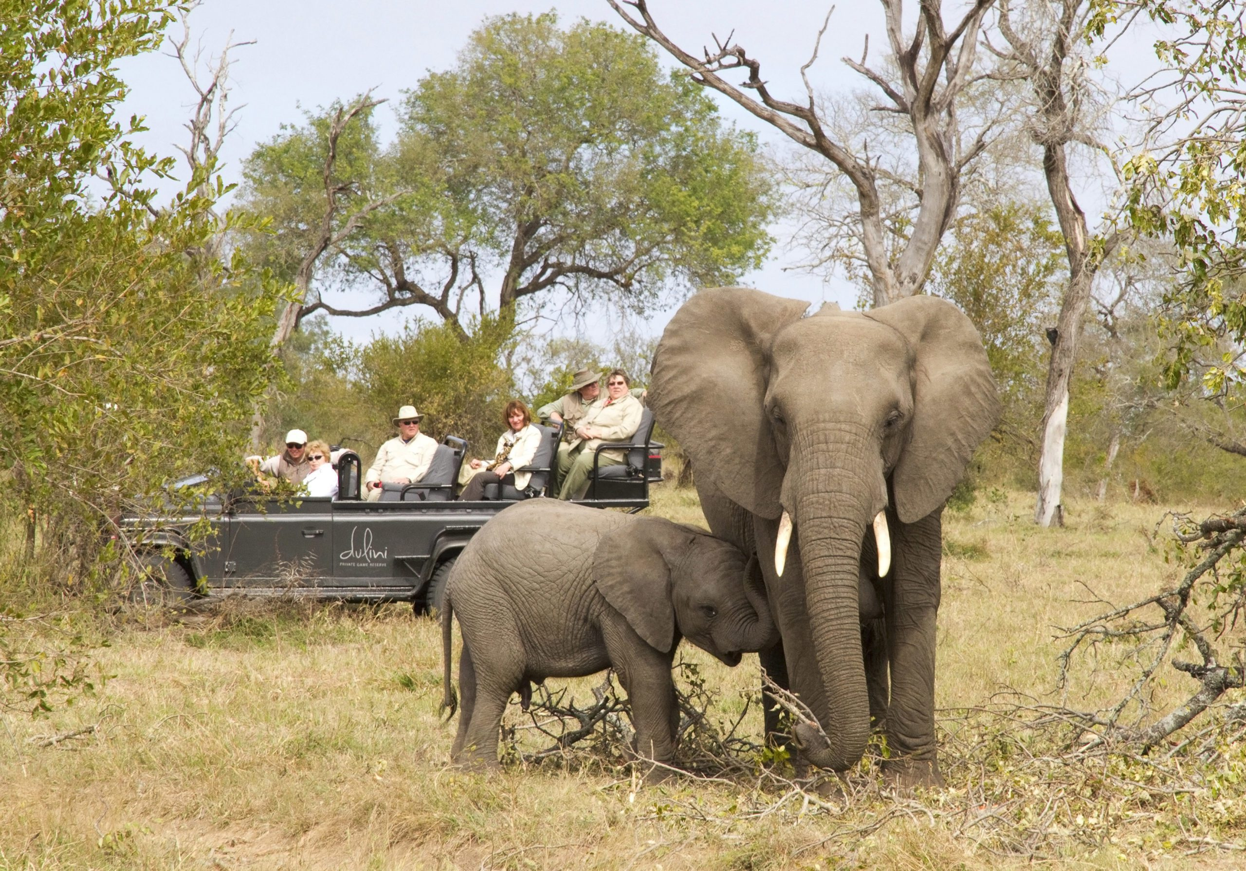 mother and baby elephant grazing on grass while guests from dulini lodge watch in their vehicle