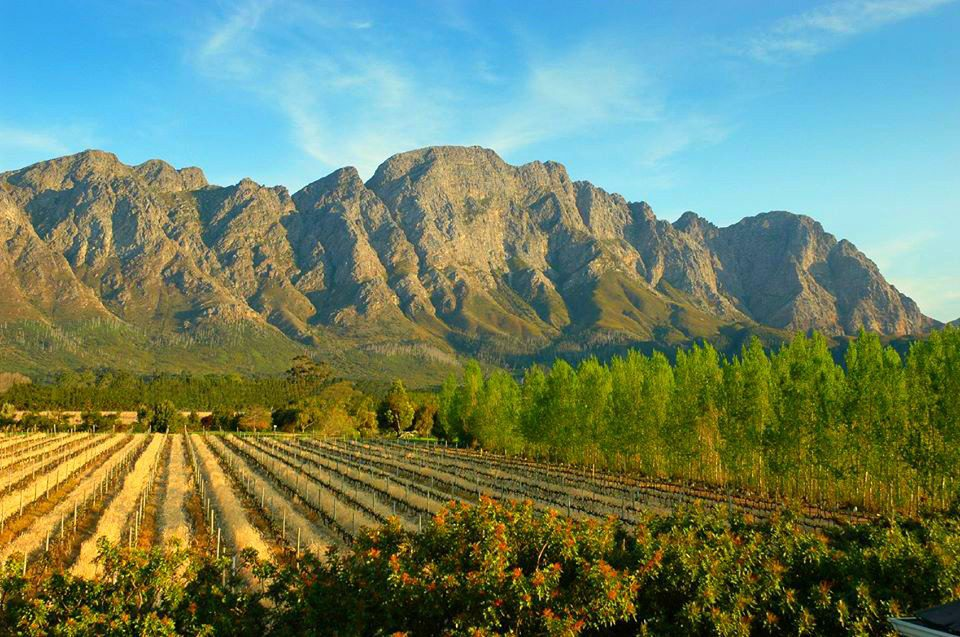 luxury South Africa food and wine safari offers a beautiful sunny day looking out from franschhoek country house over the golden vineyards