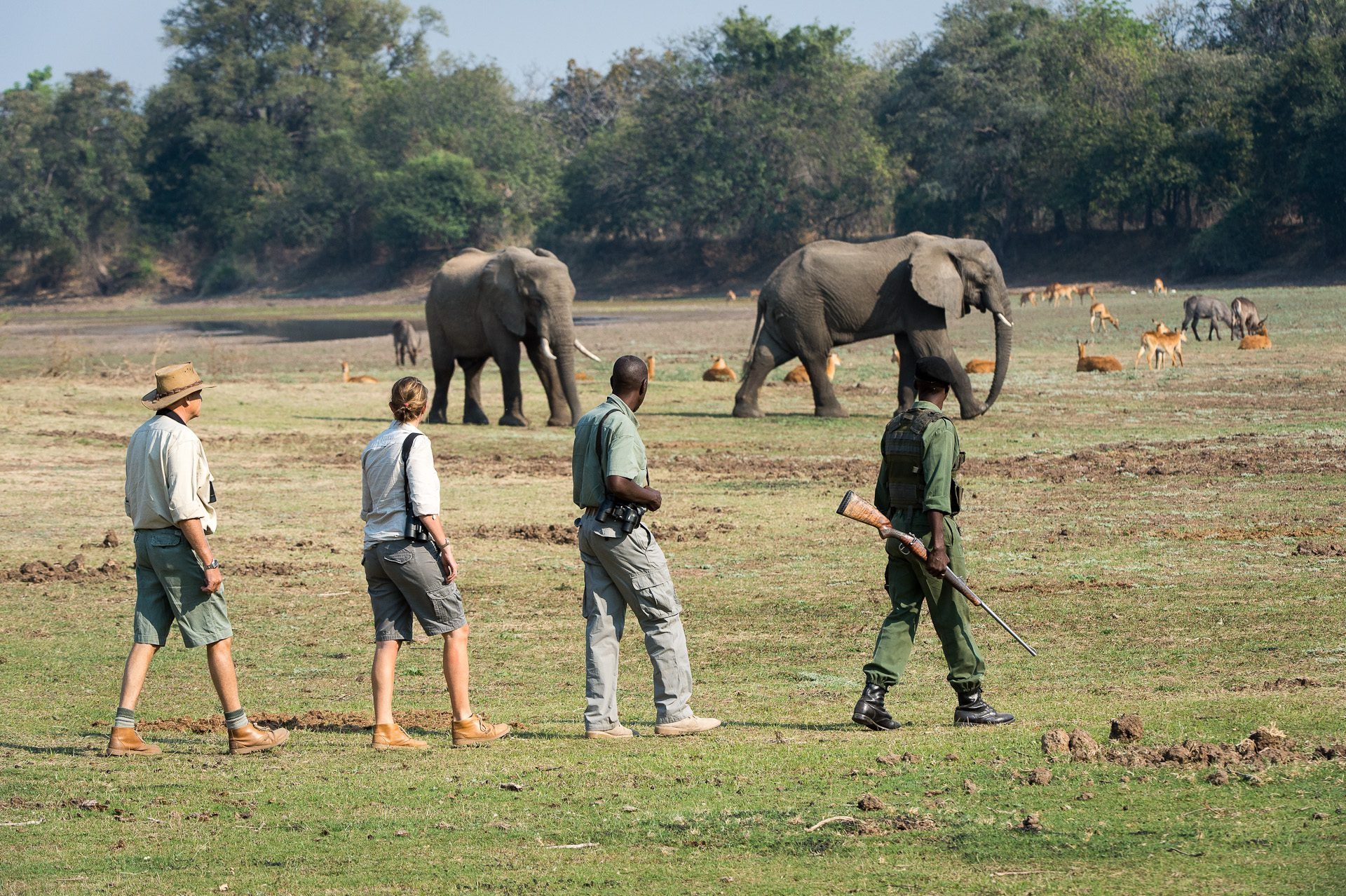 four people on a walking safari in Zambia, looking at elephant