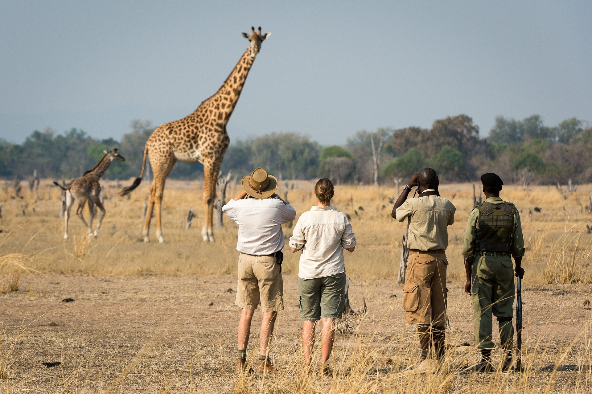 on our walking Zambia safari four people stopping to look at a giraffe on foot in South Luangwa