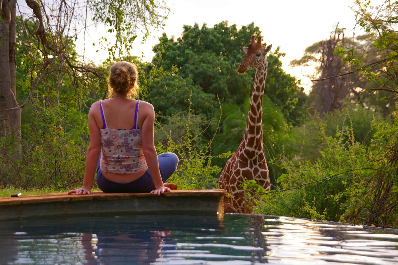 Observing a giraffe poolside at Offbeat Meru