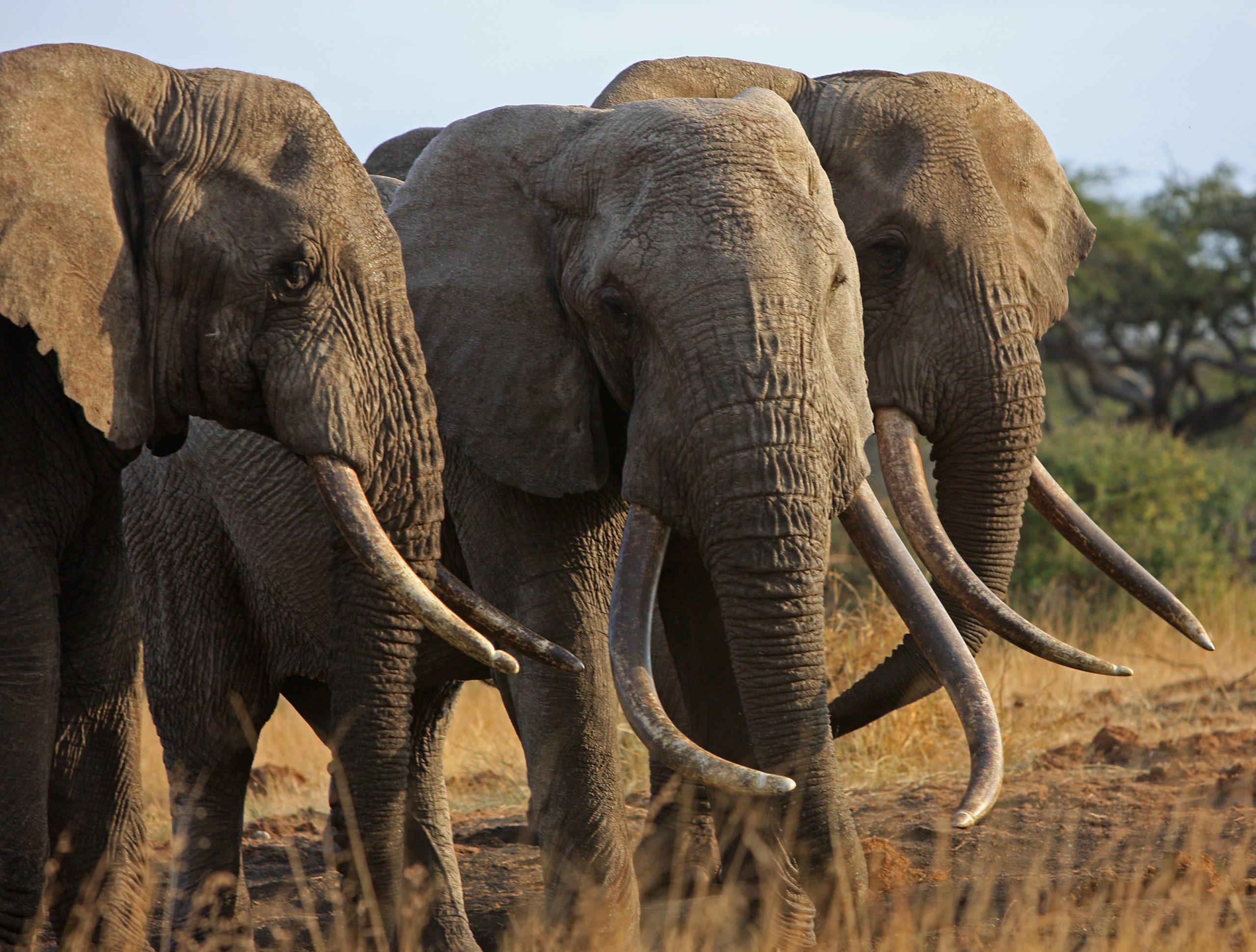 Protecting Kenya: A Luxury Conservation Safari