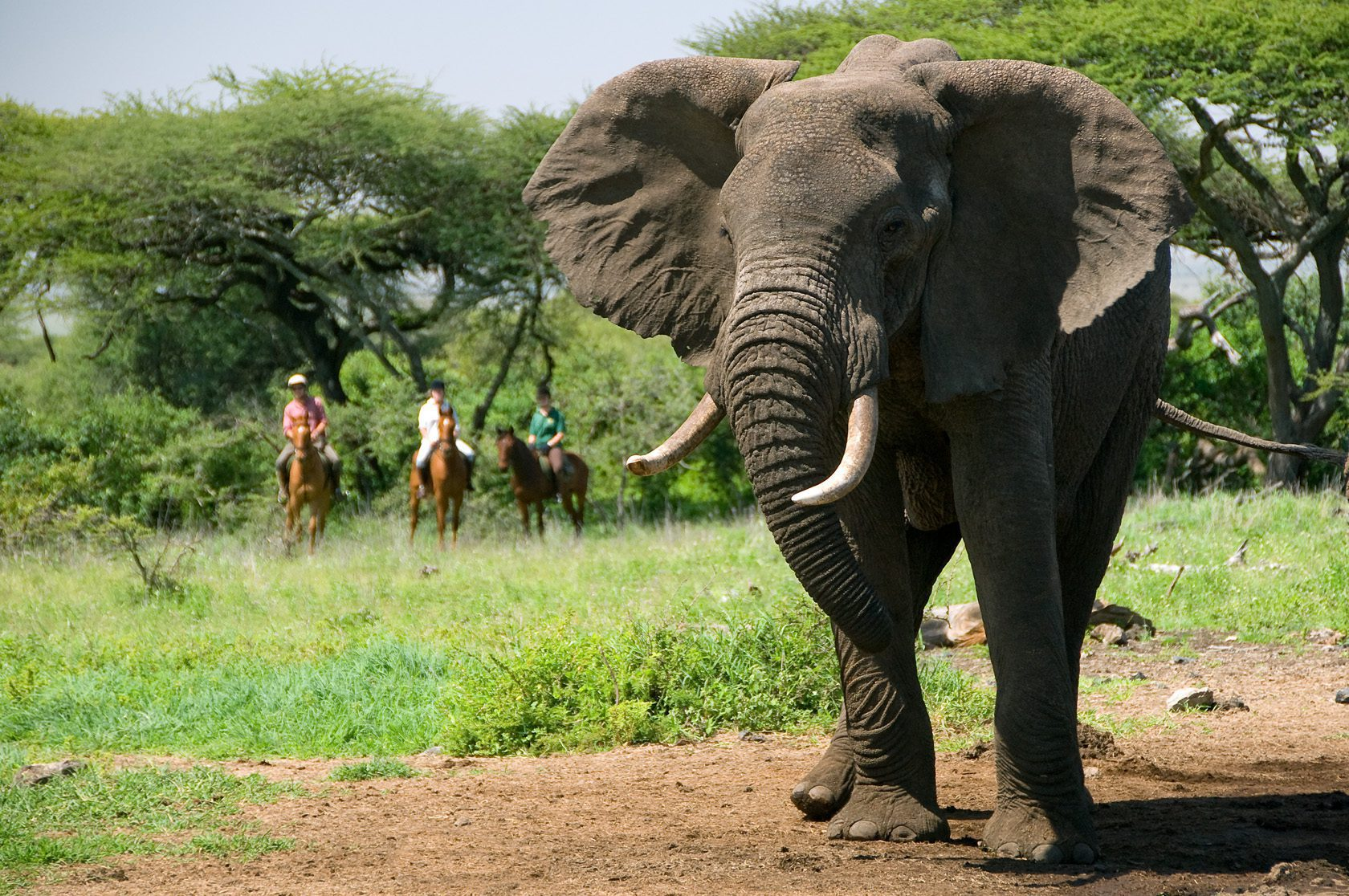 three horseback riders stop to observe a large tusker elephant at Ol Donya in Kenya