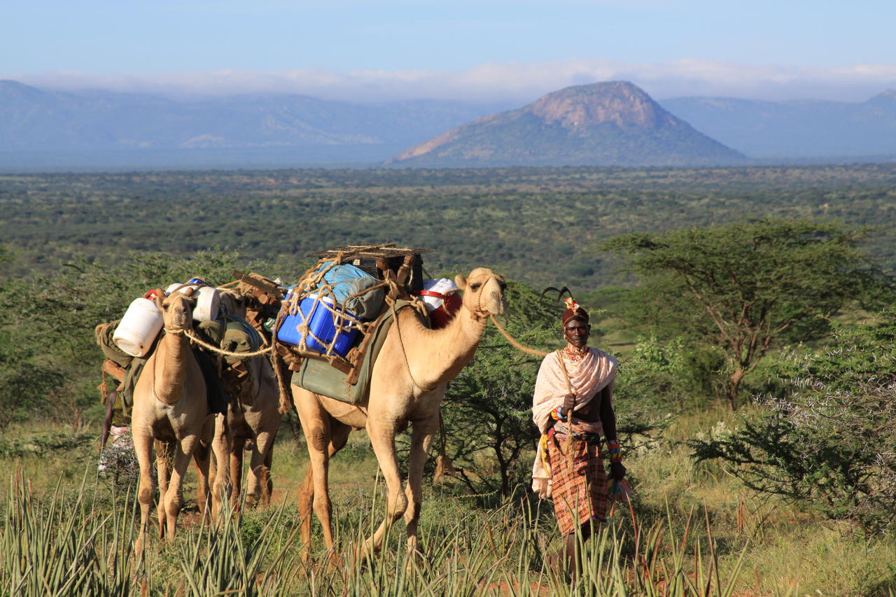one person leading a camelback safari carrying cargo in the Matthews Range of Kenya