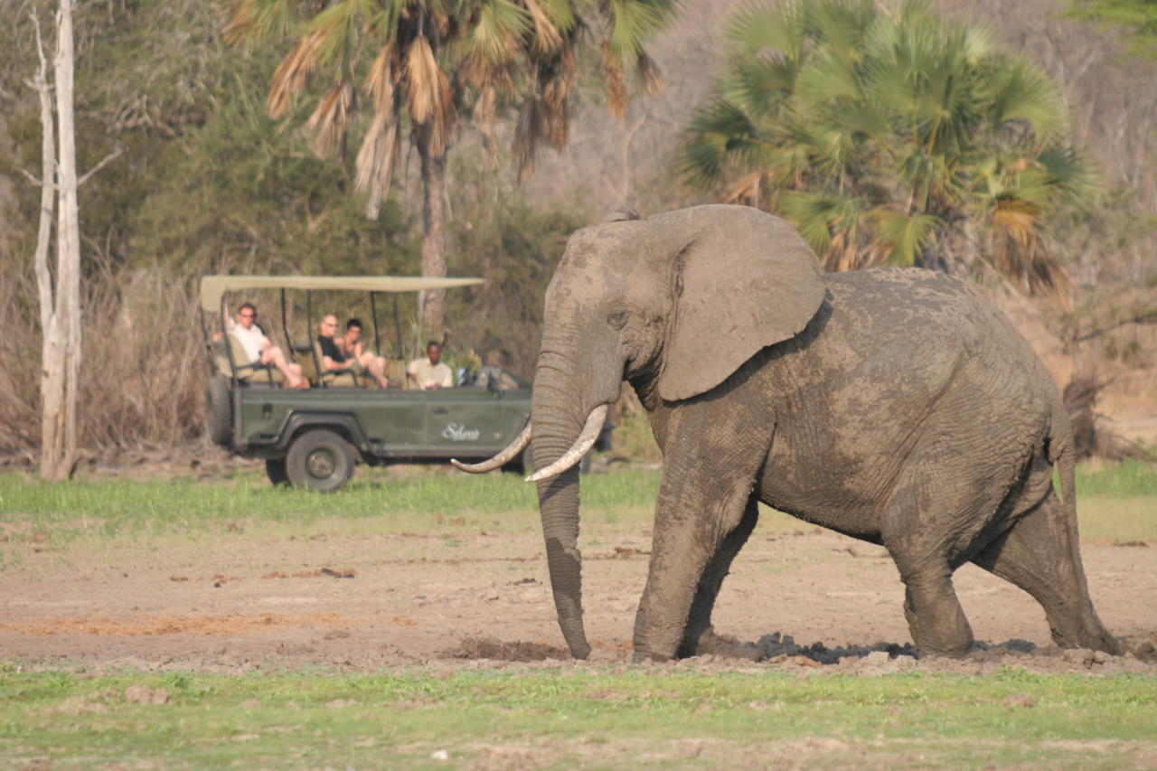 elephant with safari vehicle in the background