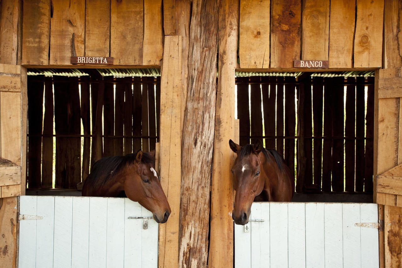 two horses in separate stables, looking out at each other at Solio Lodge, Kenya