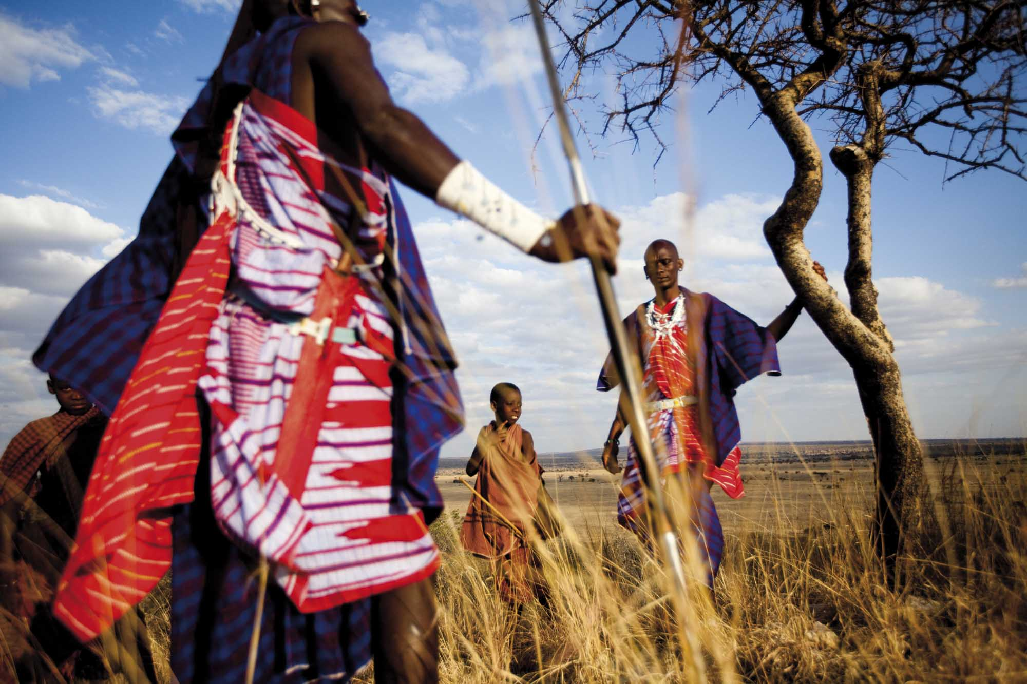 Maasai warriors dressed in brightly colored clothes and standing in the tall grass near a tree during tanzania safari