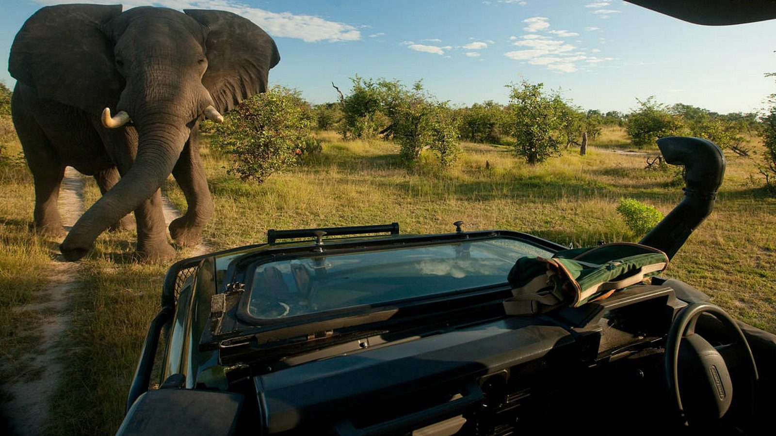 encountering an elephant on game drive zarafa botswana