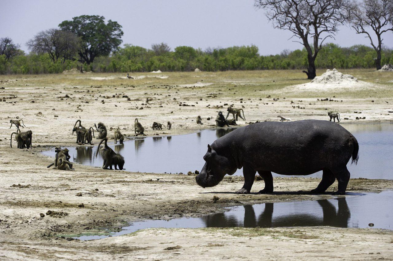 Hippo Hwange National Park