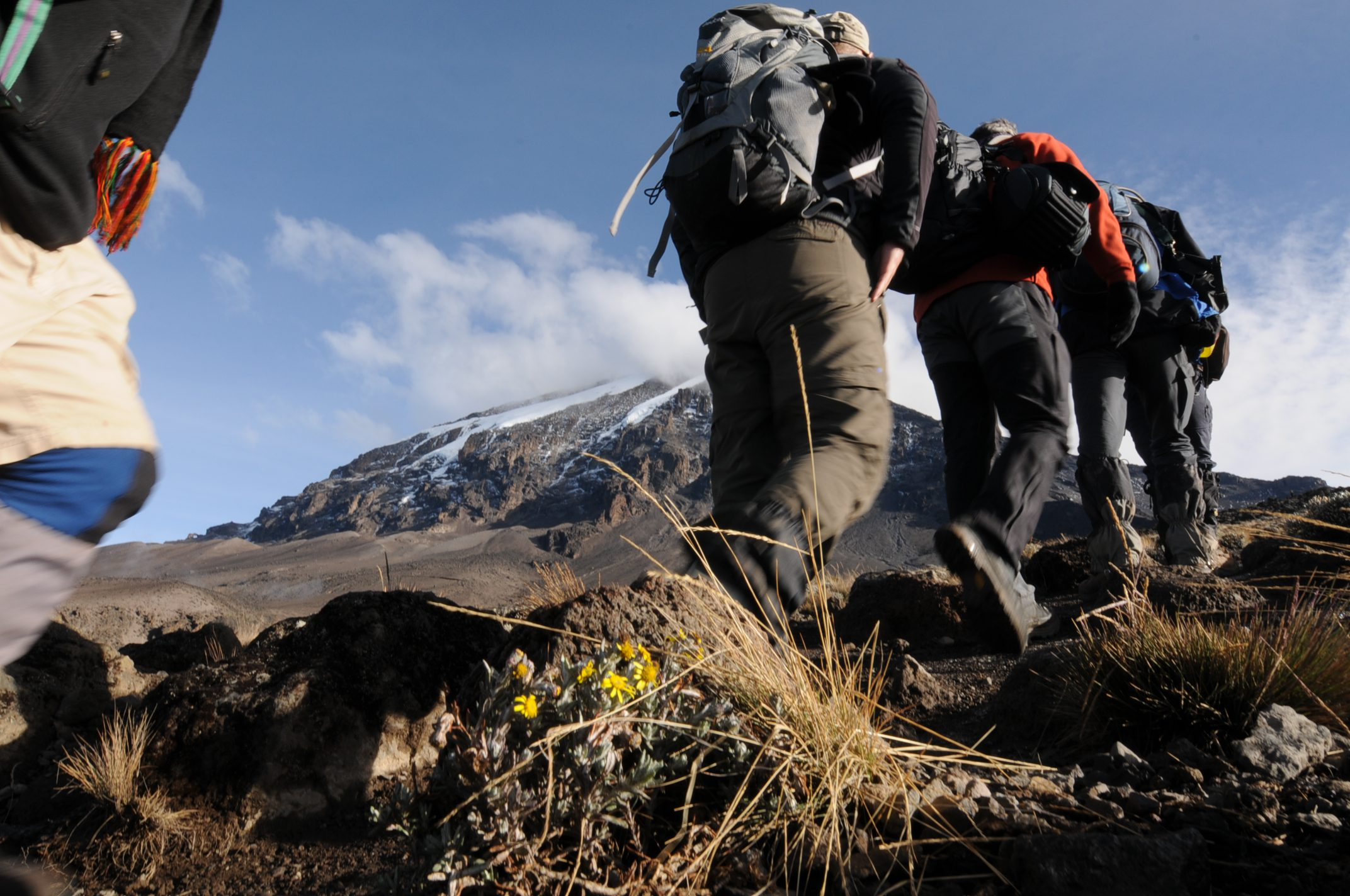 Hikers Climbing Mt Kilimanjaro with the summit in background on hiking and climbing vacation