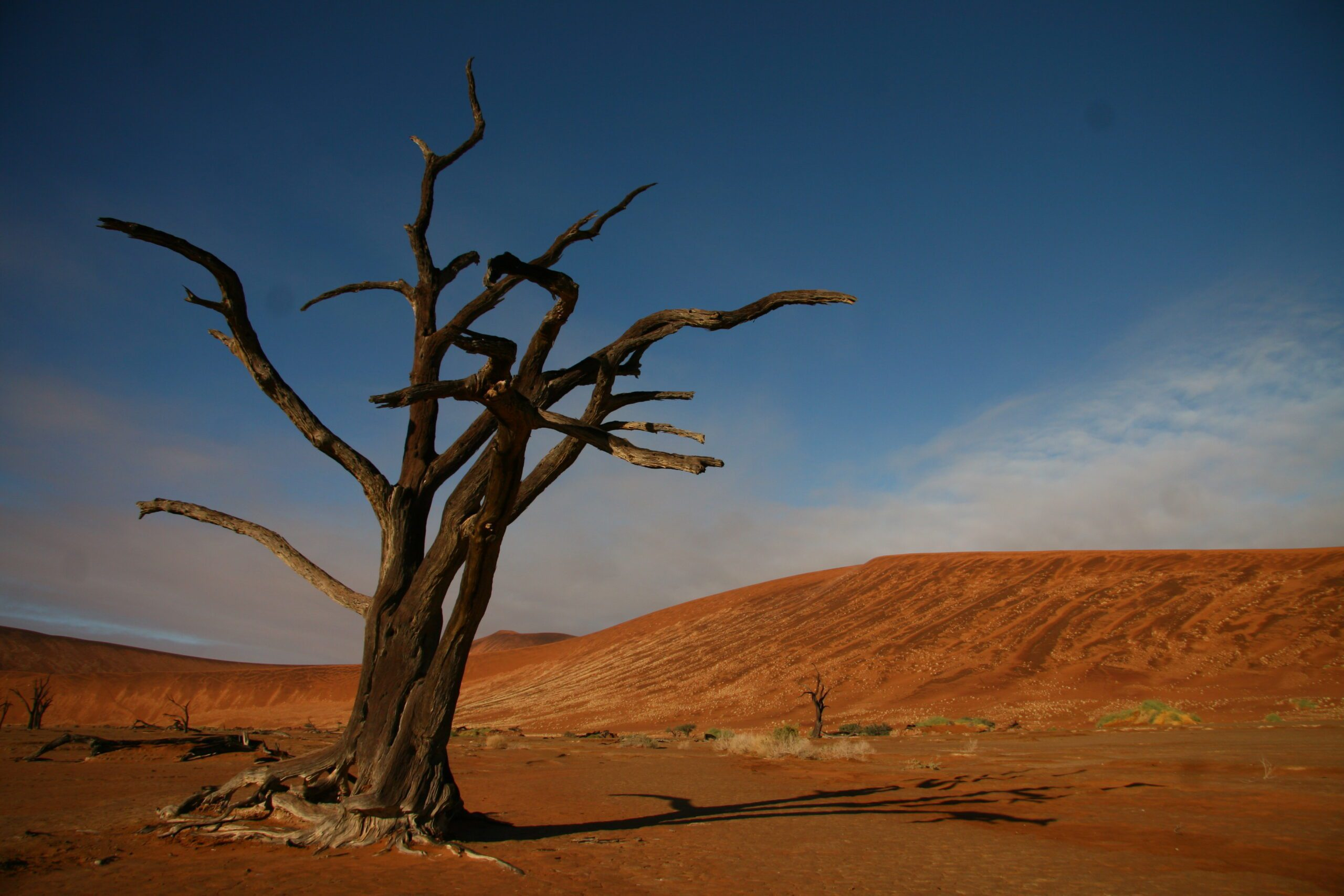 Iconic Dead Vlei tree with red dunes