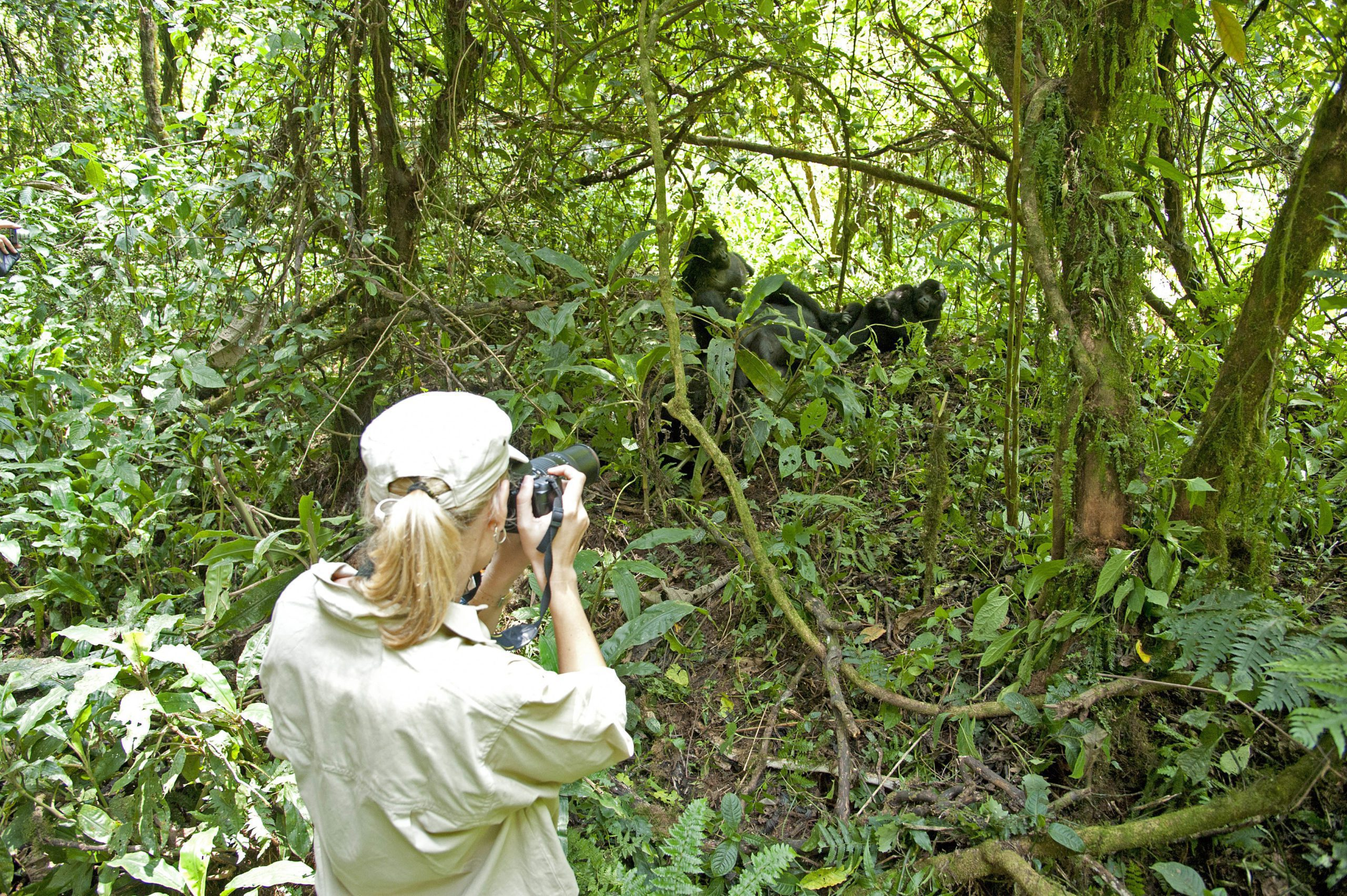 woman in a hat taking a photo of a gorilla in the forest