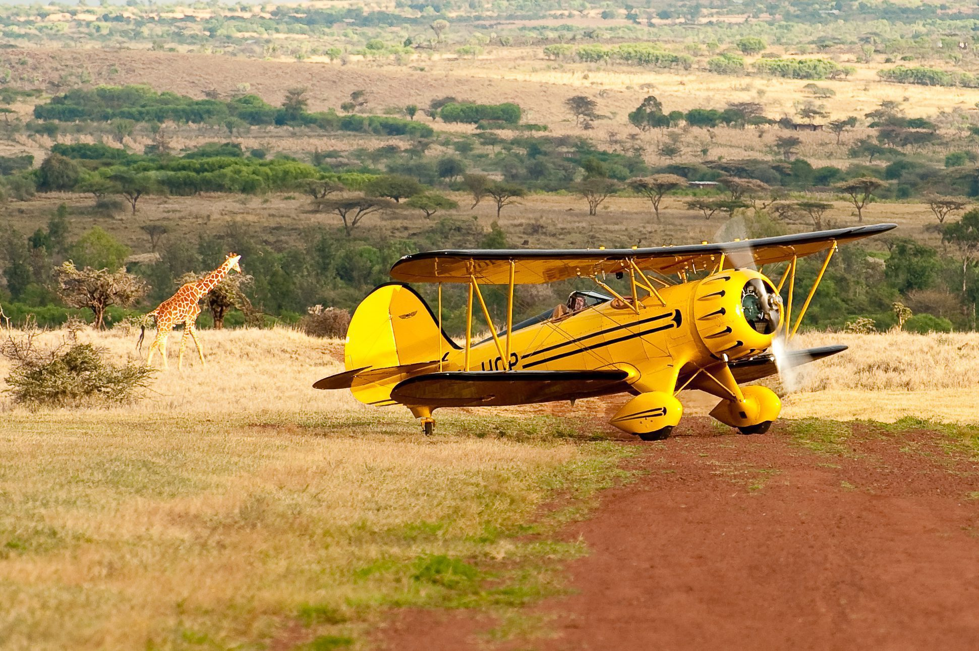 yellow biplane on the runway in Lewa, Kenya