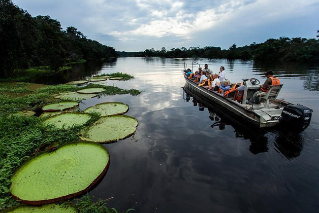 lily pads line the amazon river on safari in peru with boat carrying tourists