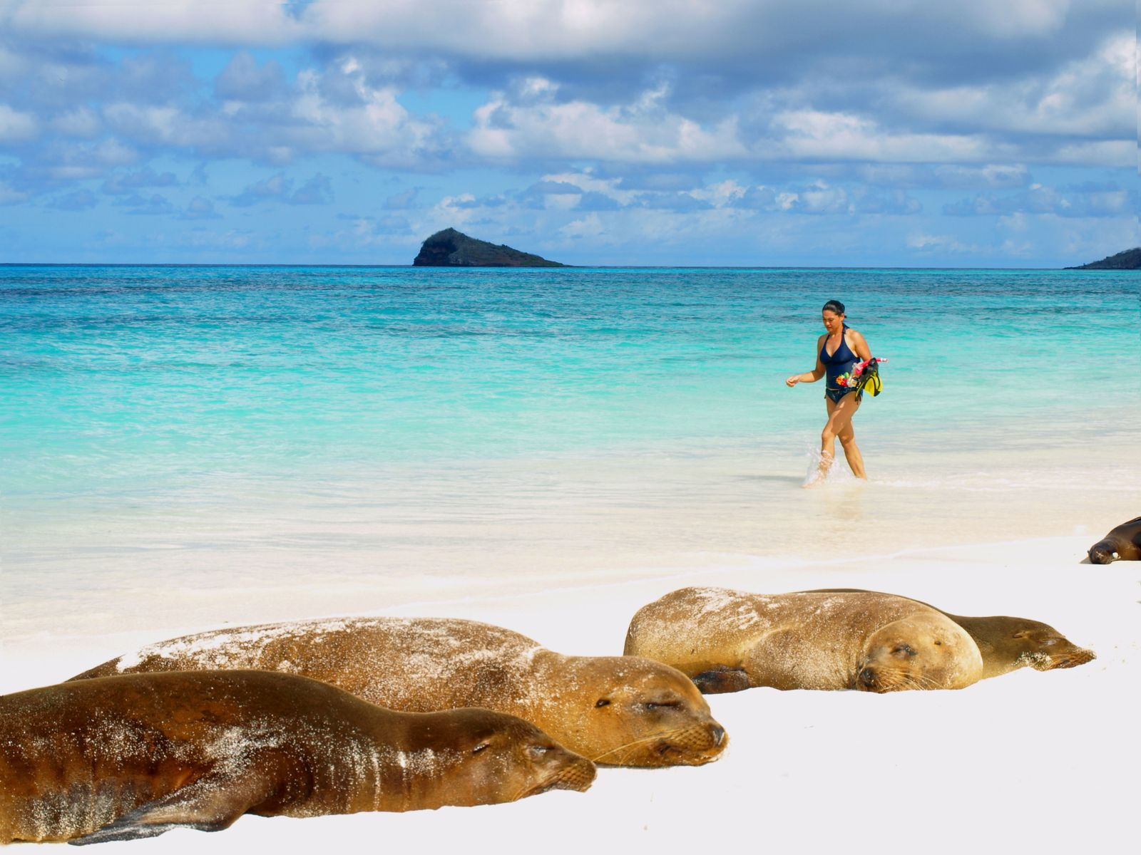 woman walking through turquoise water with sea lions in foreground