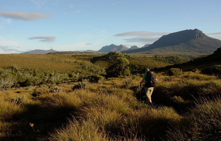 Man walks along the Cradle Mountains Huts Walk in an open field
