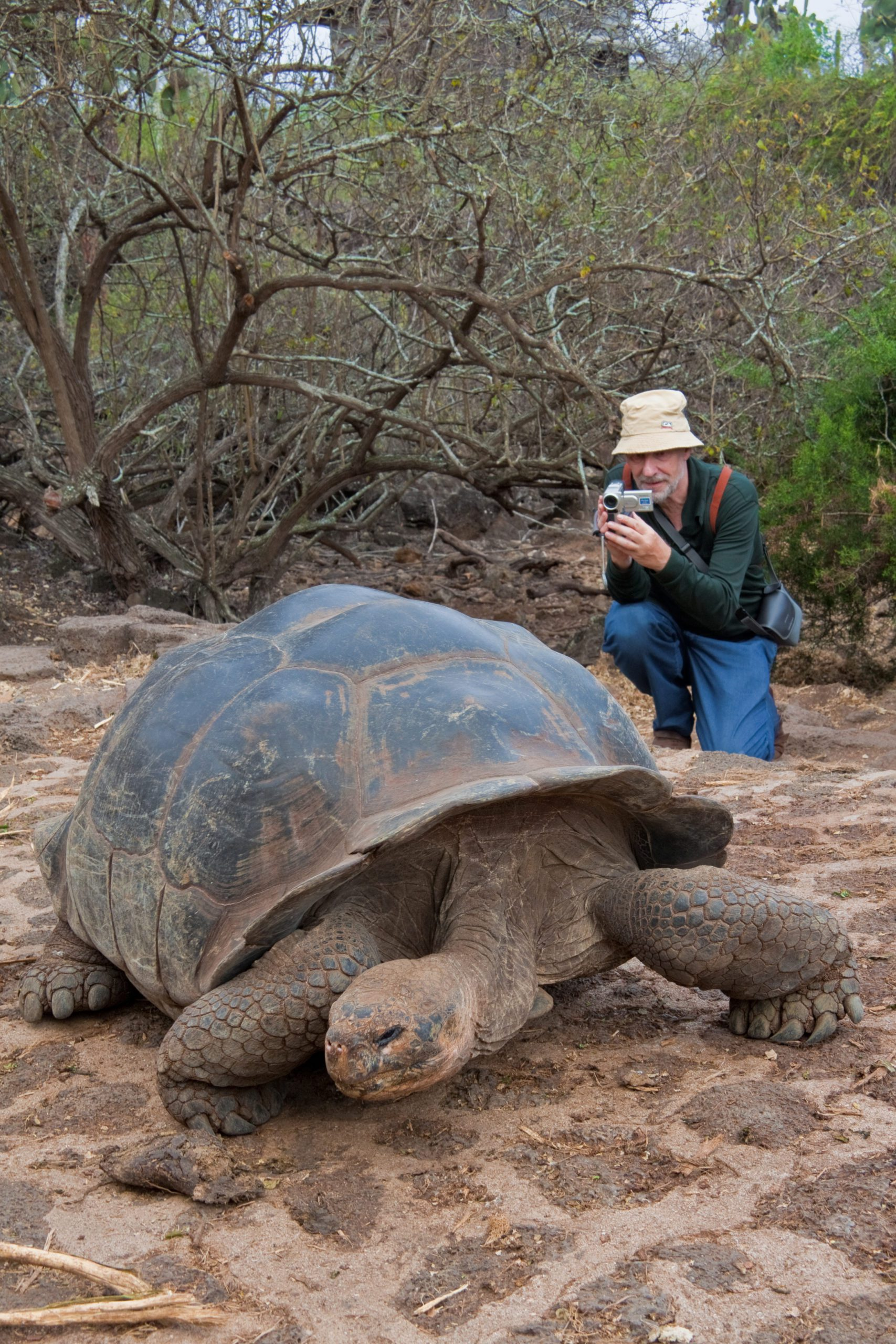 giant tortoise in sand and man taking video