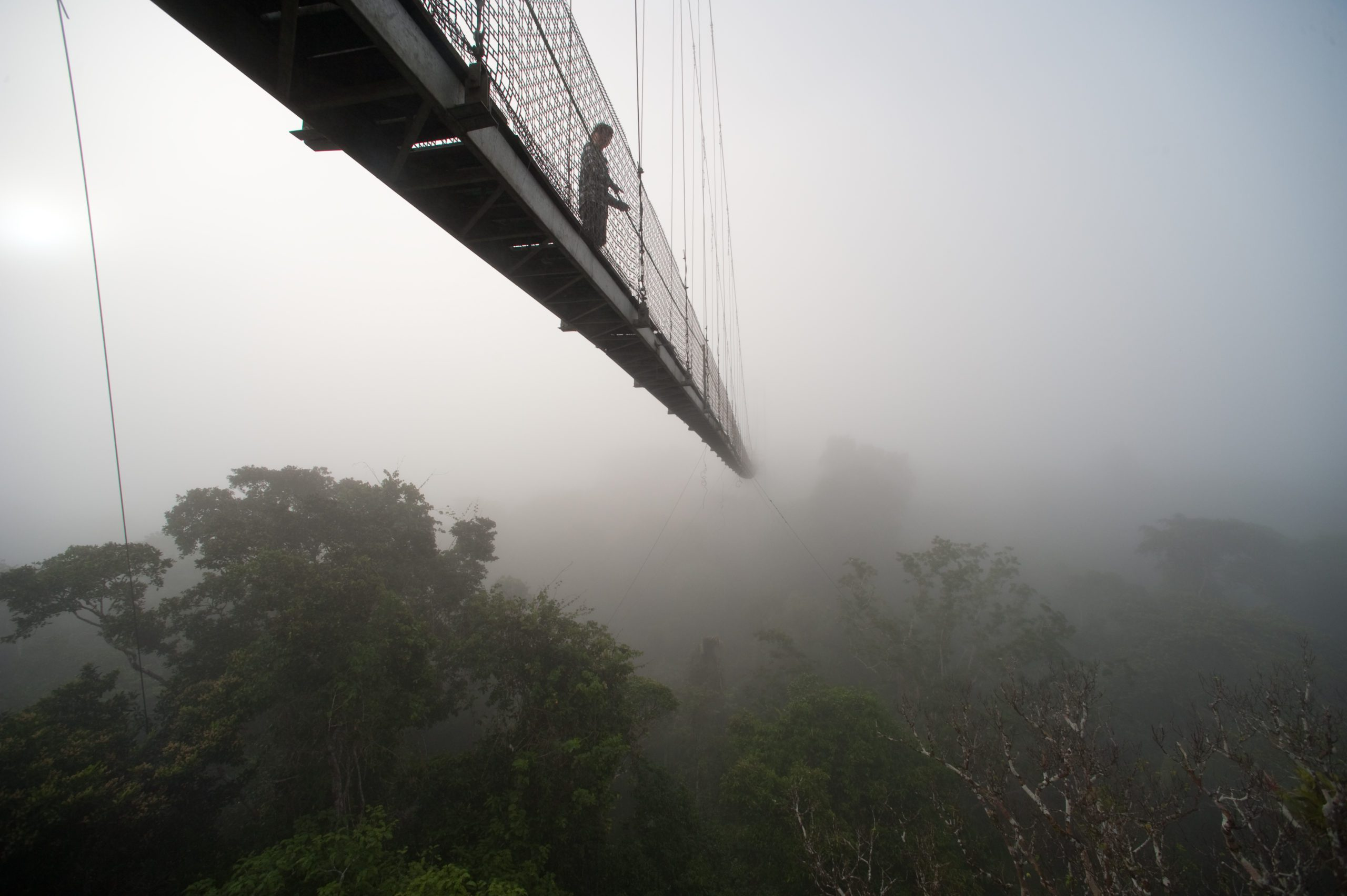 canopy bridge hanging over trees in clouds