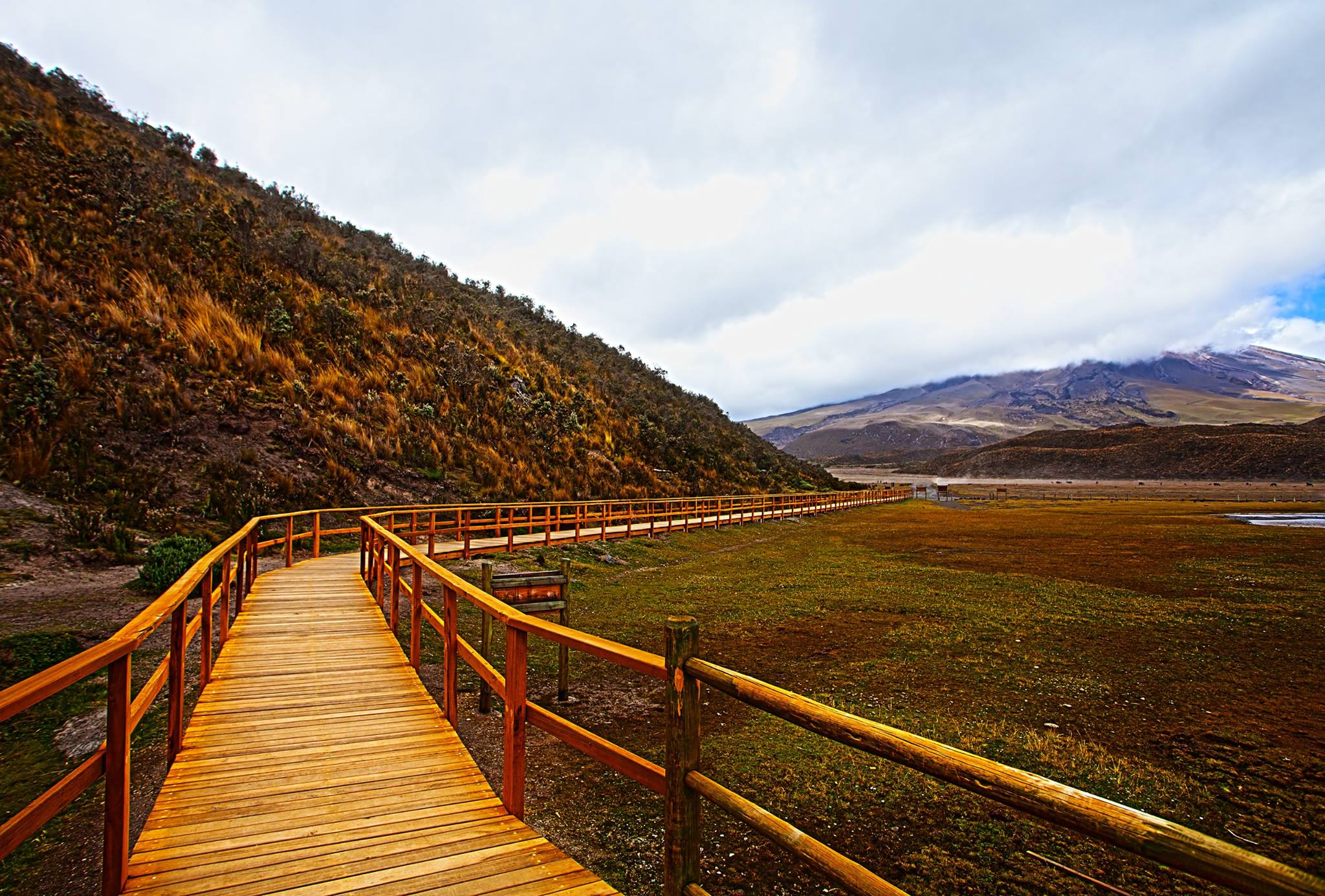 Wooden walkway in Cotopaxi National Park