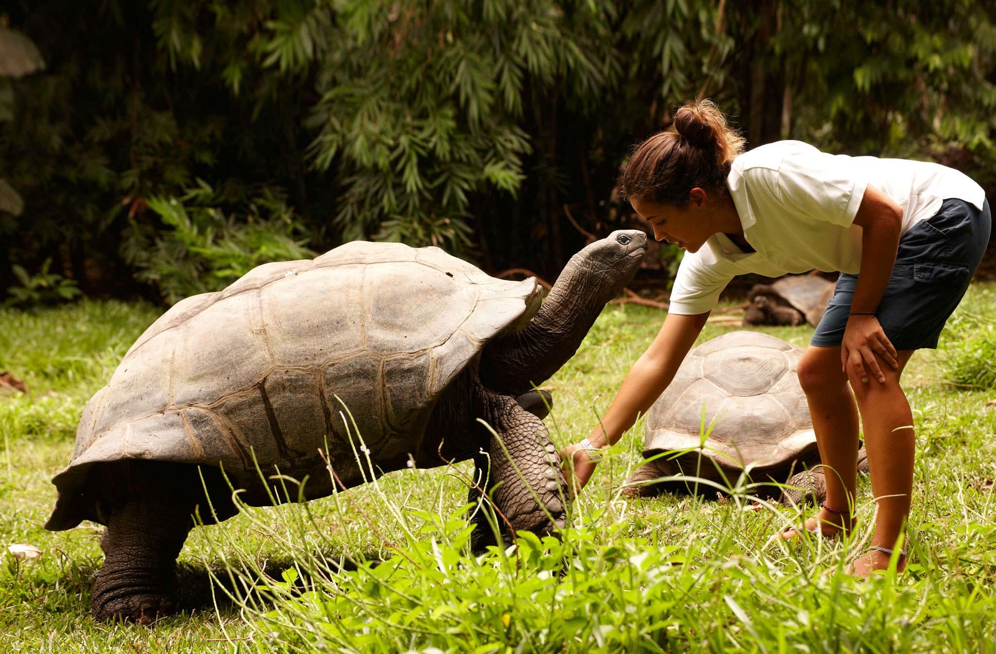 a woman feeding a giant tortoise on Fregate Island on safari in Seychelles