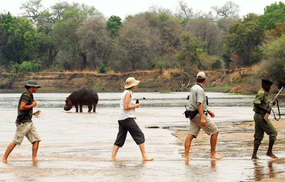 bush walk goers looking at a hippo at mwaleshi camp in north luangwa on remote Zambia safari