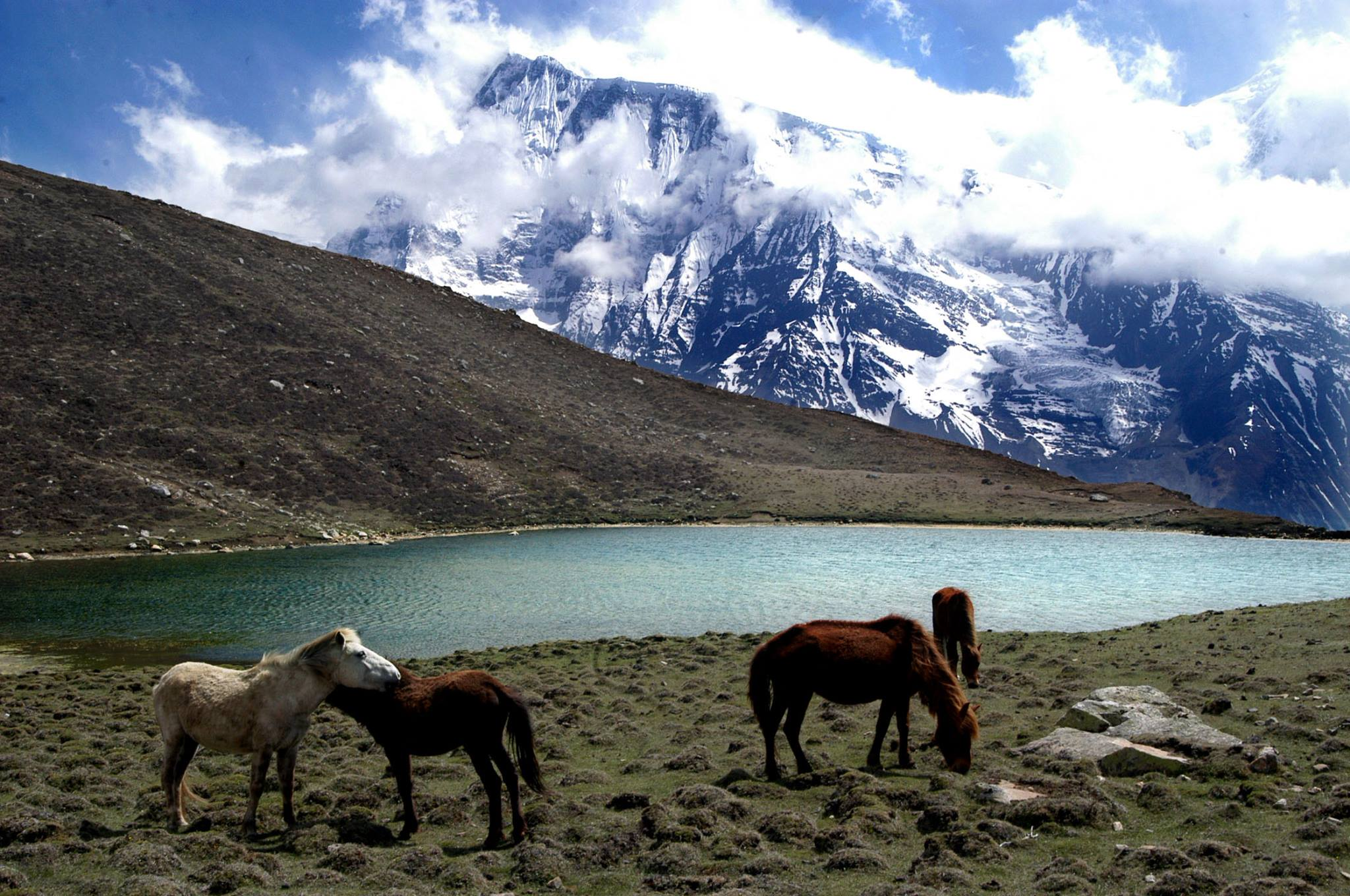 Nepal mountains with horses in foreground