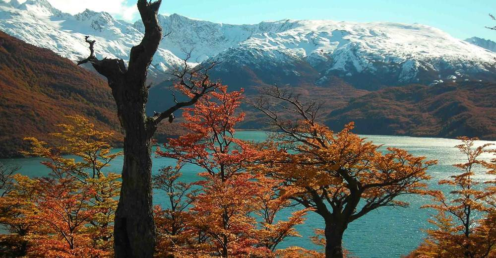 trees with autumn color over a lake with snow-capped mountains behind