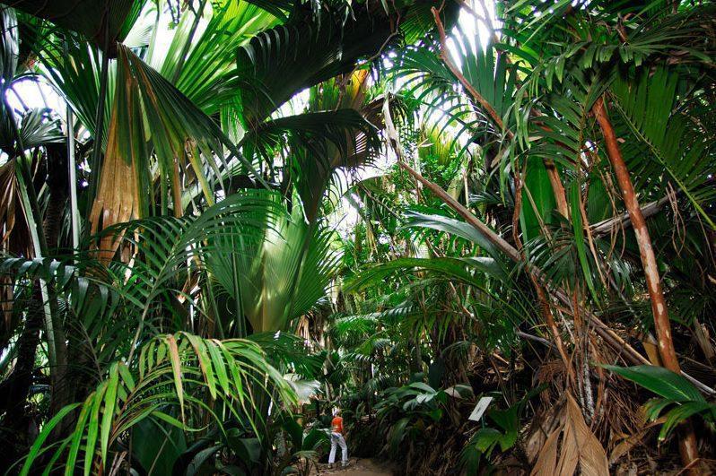 jungle walk in vallee de mai praslin seychelles
