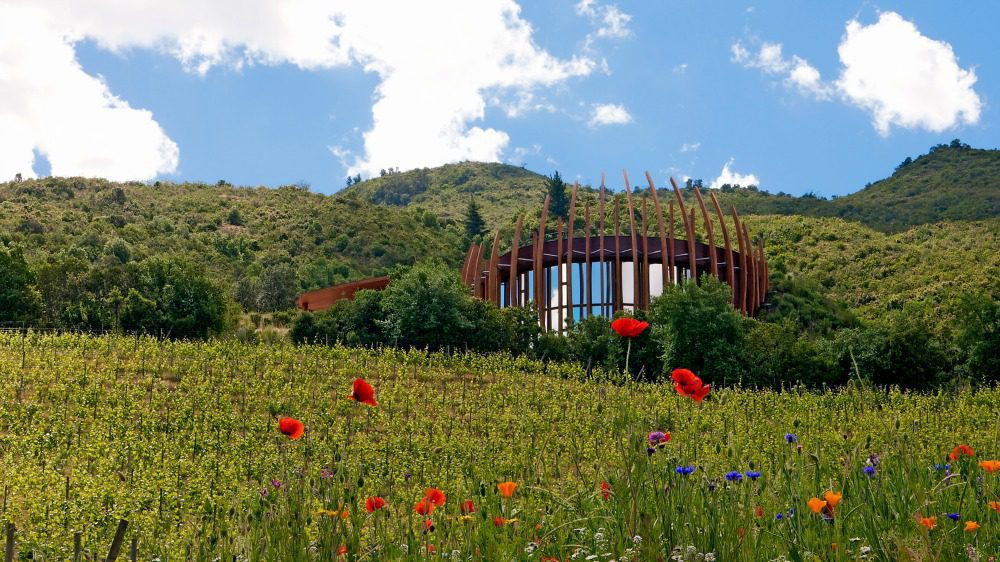 tasting room at lapostolle with red flowers in the field on Chile holiday