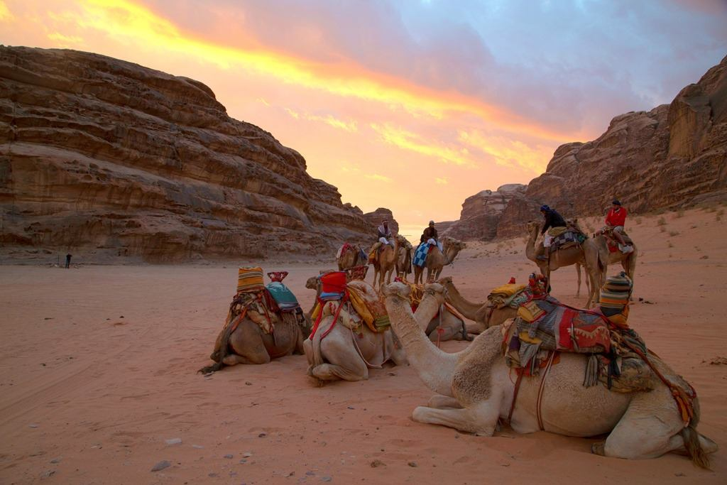 camelback safari resting in wadi rum at sunset on Jordan safari