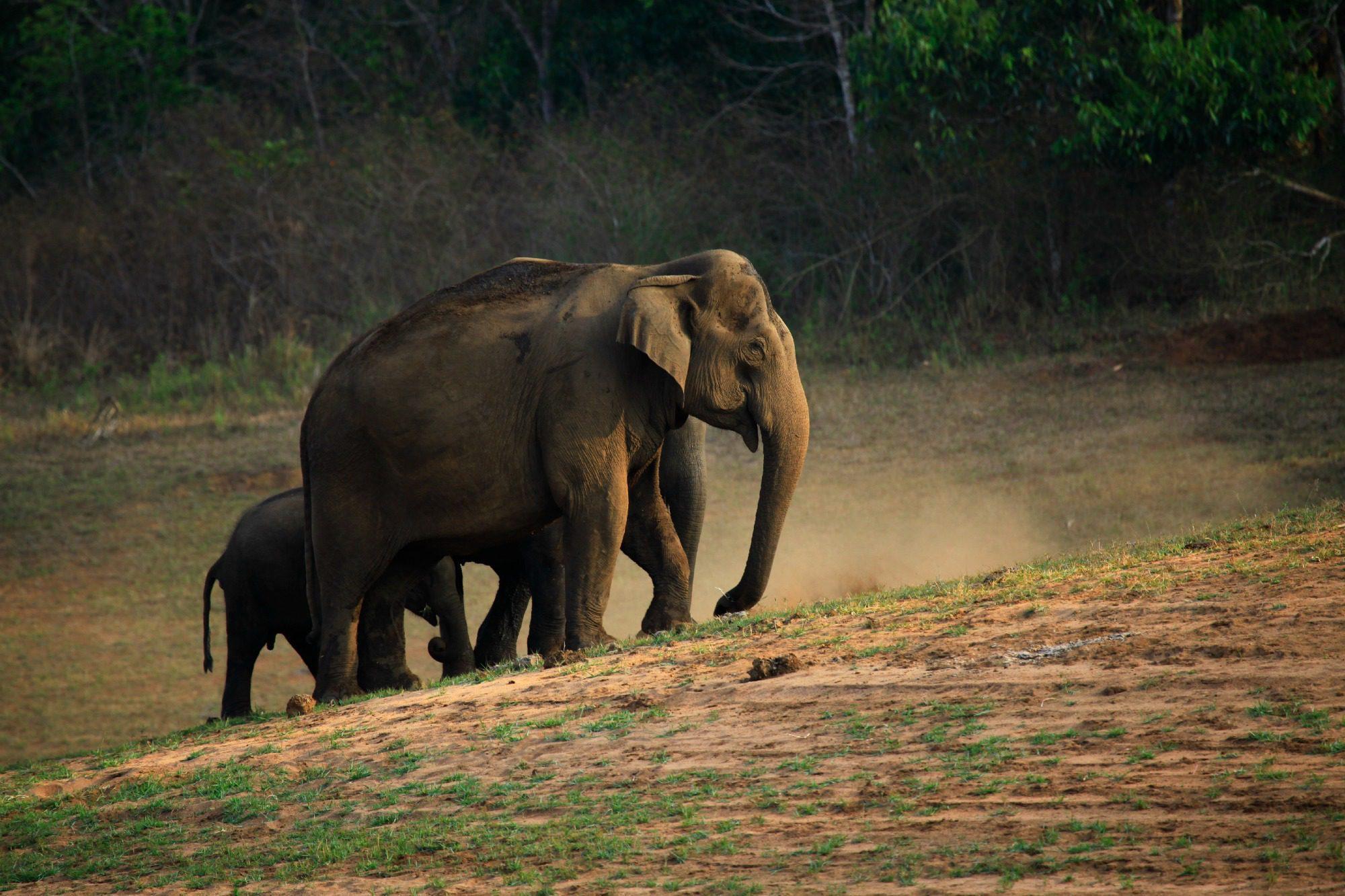 Periyar, Kerala