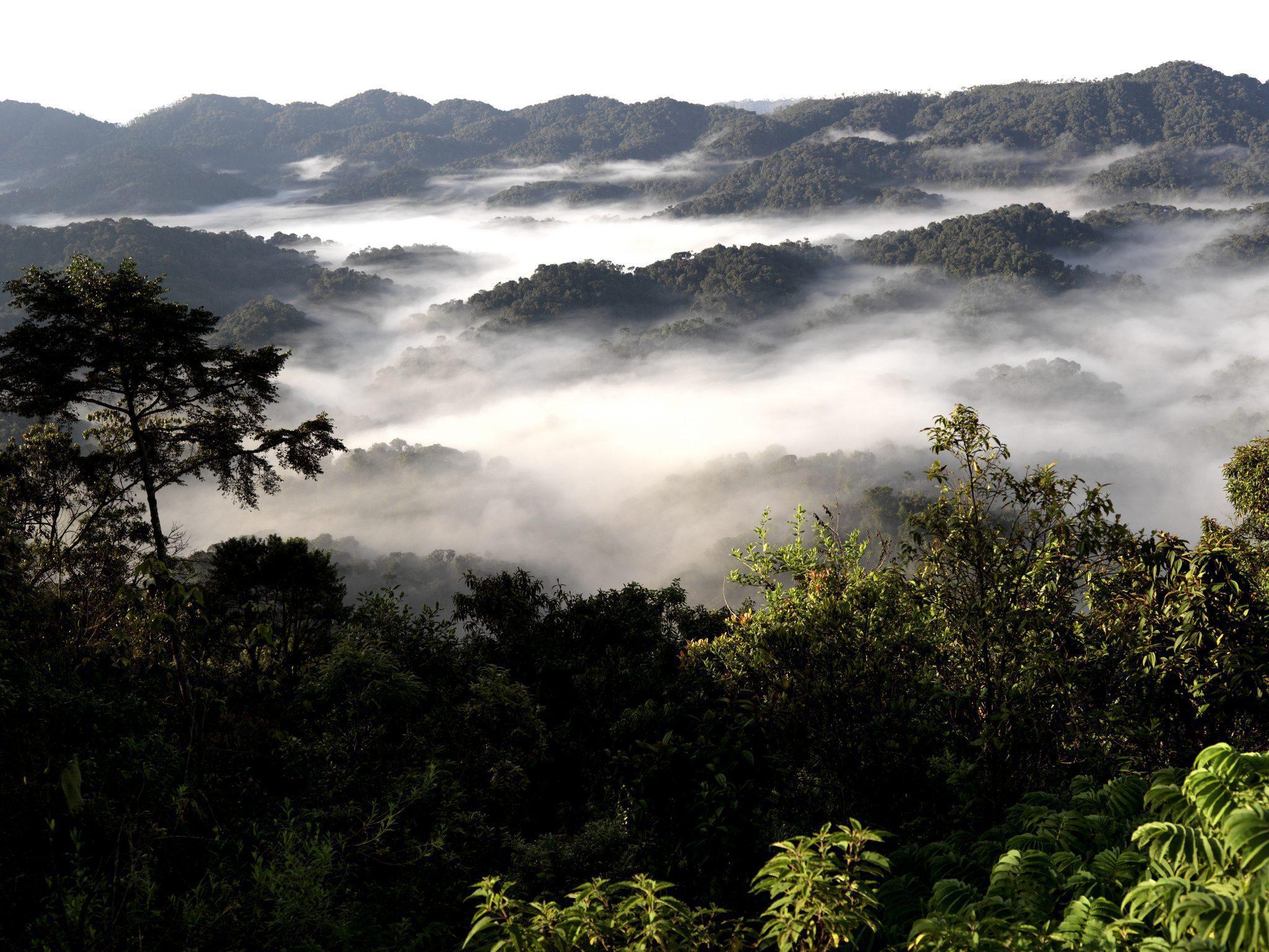 Nyungwe landscape with mist over trees seen on Rwanda safari