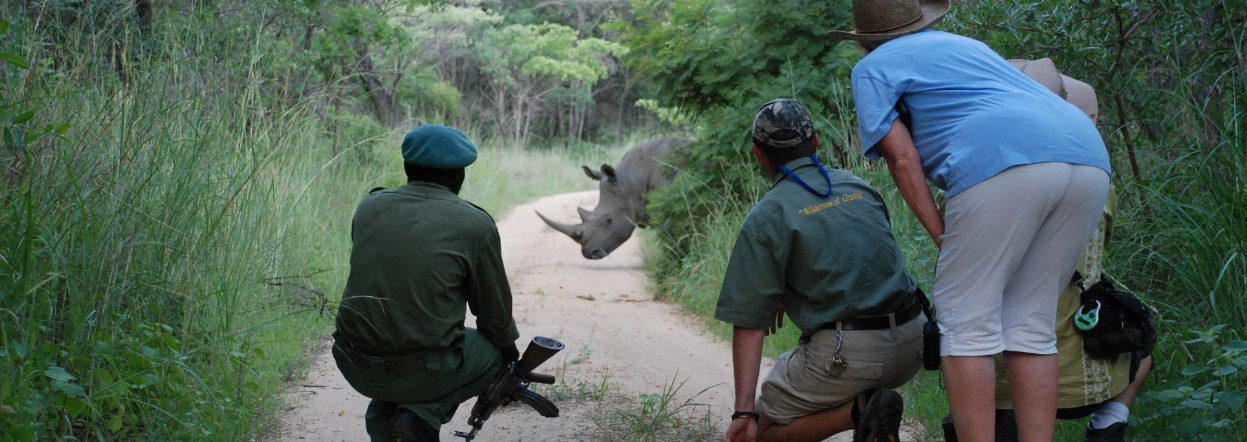 guide with guests viewing rhino on road