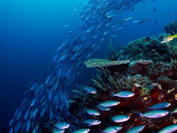 fish at a healthy reef