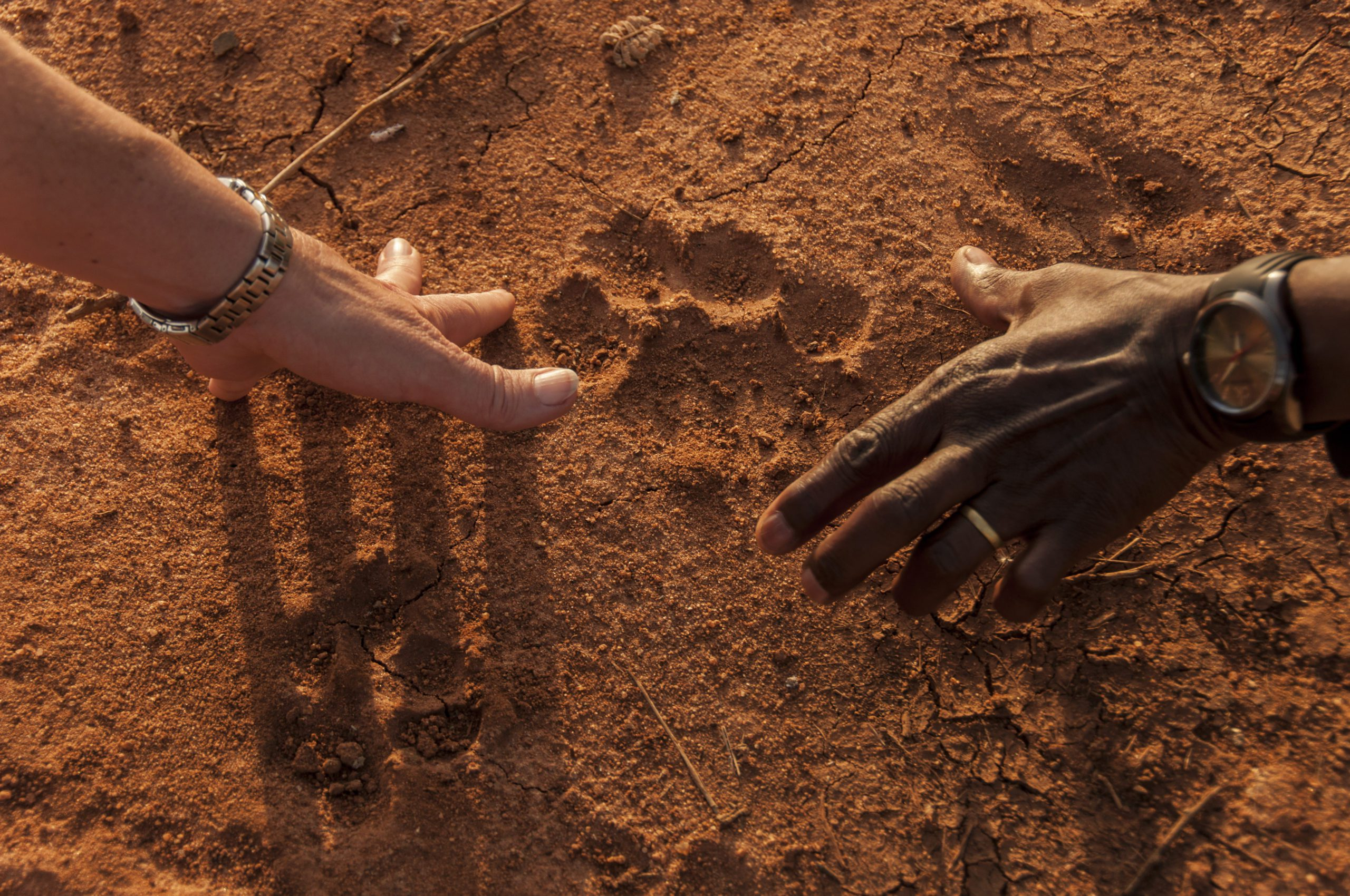 guest and guide comparing their hand print in the red dirt to that of a larger cat