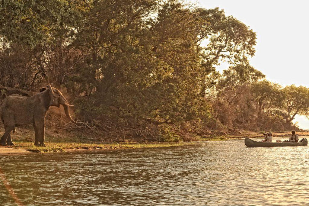 canoeing on the zambezi river in Mana Pools