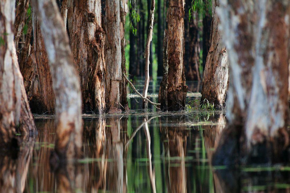 Mary River Bamurru Flood Plains