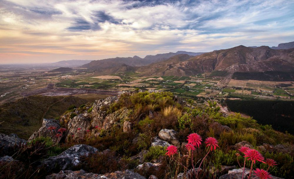 flowers and fields with mountain at sunset on Southern Africa safari